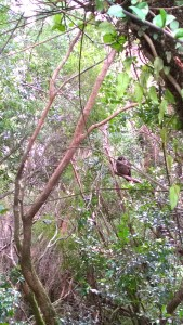 Look! We spotted an owl!
