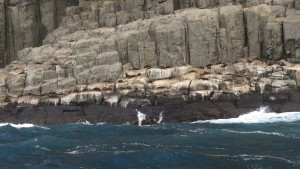 Seals along the cliff edges